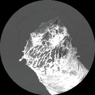 電子顕微鏡による髪の断面写真